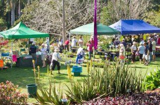 Noosa Botanic Gardens Plant Fair