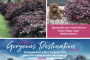 PMA Loropetaplum 'Plum Gorgeous' – Gorgeous Destination Competition
