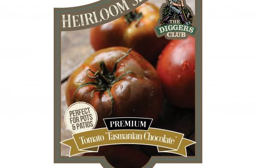 Diggers Heirloom Tomato Seedlings Available at Your Garden Centre Now