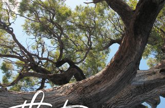 91-year-old Hall of Fame photographer dedicates 28th  book to the preservation of trees