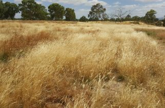 Visit to Flora Victoria – Native Grass Specialists