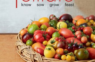 Tomato: Know sow grow feast