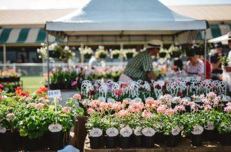 Collectors' Plant Fair 2020