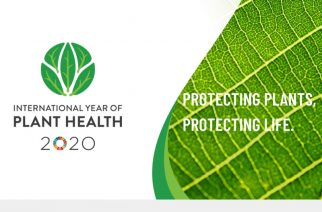 International Year of Plant Health launches in Australia
