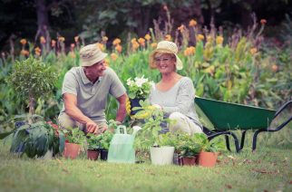 Gardening will keep you well during the coronavirus pandemic
