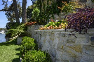 Do you have Sydney's best residential front garden?
